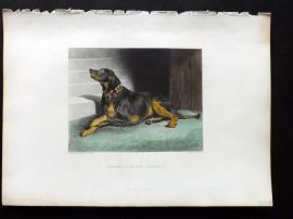 Landseer 1880 Antique Hand Col Dog Print. Waiting for the Countess